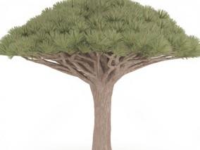 松针树木 古松 松树盆栽 盆栽 迎客松 罗汉松 古青松 青松