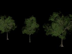 低模场景树木 园林植物 大树 树林 绿化树木 道路树木  3d模型