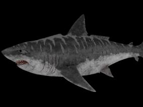 大白鲨 大鱼 巨型海洋生物 食人鱼 食人鲨 凶猛的海鱼 海洋捕食动物 3d模型