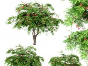 合欢树景观树 3d模型