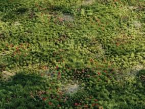 花草草坪植物 Corona Scatter 3D模型