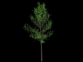 树木 大树  树木 植物 园林树木 小树木 阔叶长绿树  3d模型