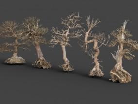 盆景 枯树 老树 怪树 写实植物