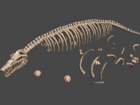 龙骨、鱼龙、恐龙、化石、侏罗纪、鹦鹉螺、海贝 3d模型