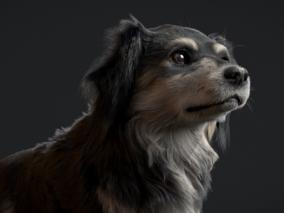 写实 小狗   设计师 sara-savi